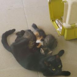 kattenverblijf